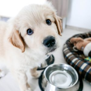 Rice Cooker Recipes The Best Dog Food for Your Puppy, According to a Vet