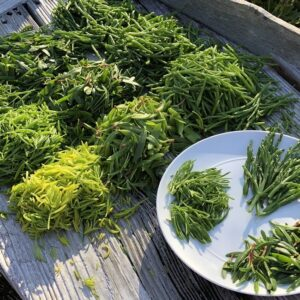 Rice Cooker Recipes Could these 'salt-loving' edible sea vegetables be the new kale?